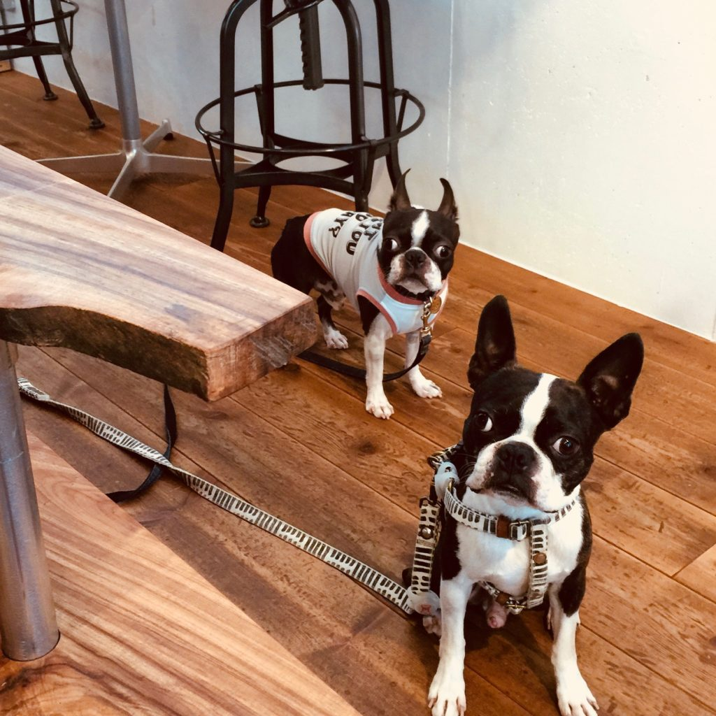dogcafe-Bostonterrier-hopi-coffee-bean-stand-cafe-fukuoka-organic-decaf-caffeine
